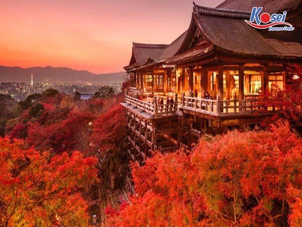 Choáng ngợp trước cảnh cung đường tràn ngập lá phong đỏ ở Nhật Bản tuyệt đẹp 3