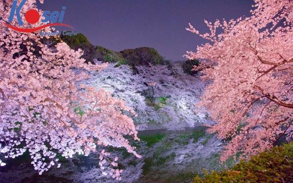 18 công viên đẹp nhất tại Tokyo