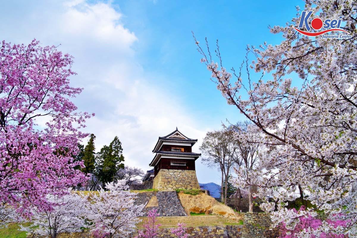 https://kosei.vn/10-dia-diem-ngam-hoa-anh-dao-o-nhat-cuon-hut-tai-nagoya-tinh-aichi-n2827.html