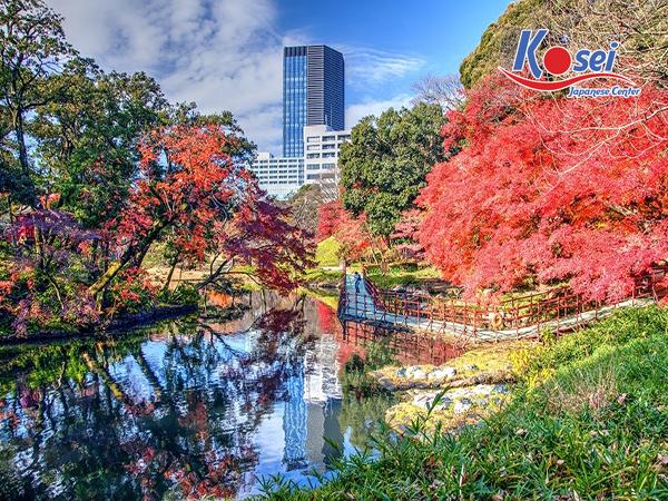 lịch ngắm hoa anh đào ở Vườn bách thảo Koishikawa