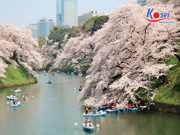 lịch ngắm hoa anh đào ở Chidorigafuchi