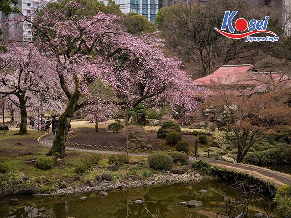 lịch ngắm hoa anh đào ở Koishikawa Korakuen