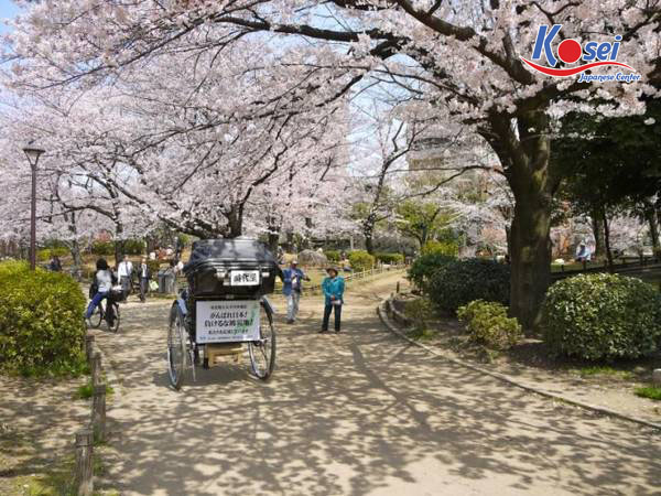Hoa mận rực rỡ hơn bao giờ hết trong lễ hội tại Kairakuen