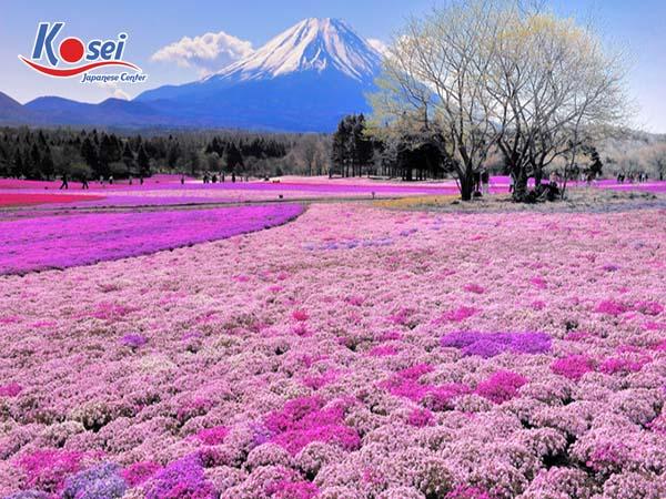 50 sự thật thú vị về văn hóa Nhật Bản có thể bạn chưa biết
