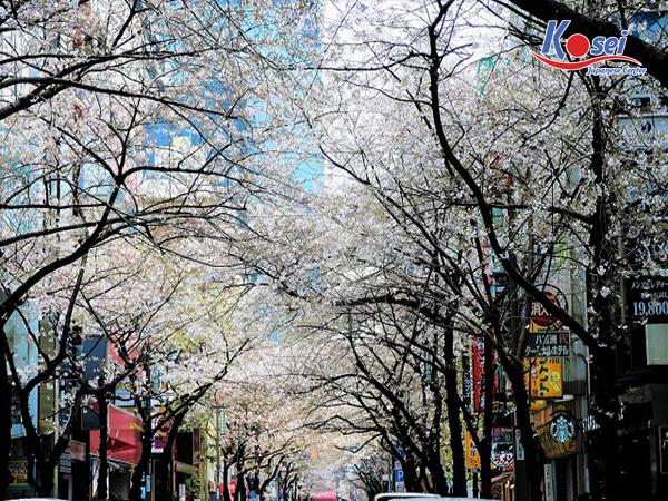 https://kosei.vn/10-cau-noi-chuan-ban-trai-ngon-tinh-33-n2276.html