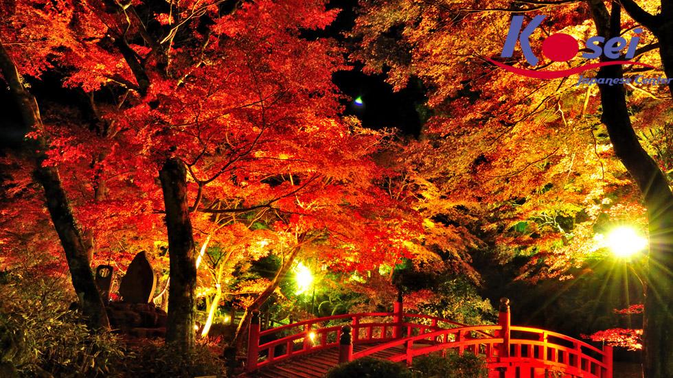 Choáng ngợp trước cảnh cung đường tràn ngập lá phong đỏ ở Nhật Bản tuyệt đẹp 1