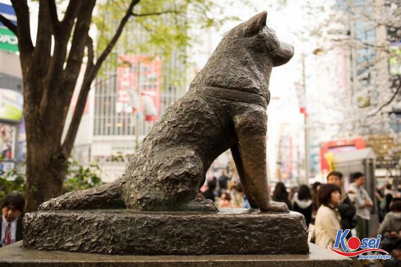 chú chó hachiko, chú chó hachiko nhật bản, câu chuyện về chú chó hachiko, cảm nhận về chú chó hachiko, câu chuyện chú chó hachiko