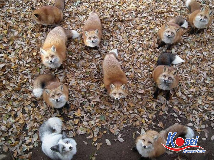 https://kosei.vn/tham-quan-lang-cao-zao-kitsune-nhat-ban-n3263.html