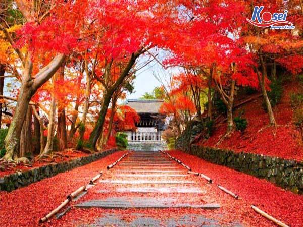 Mùa thu Nhật Bản ấn tượng với những ngày mùa thay lá