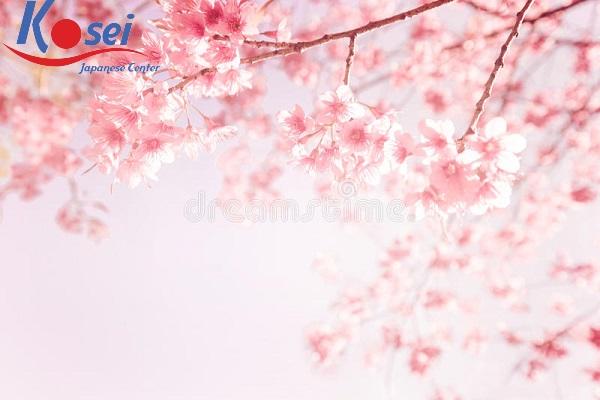 Học tiếng Nhật qua bài hát: Sakura color
