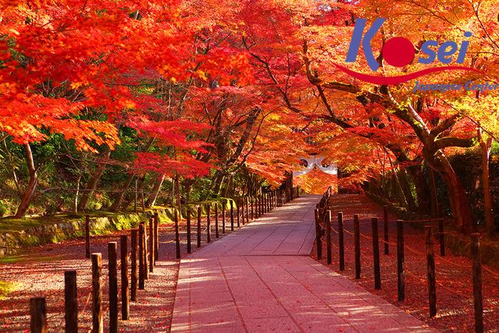 Choáng ngợp trước cảnh cung đường tràn ngập lá phong đỏ ở Nhật Bản tuyệt đẹp 2