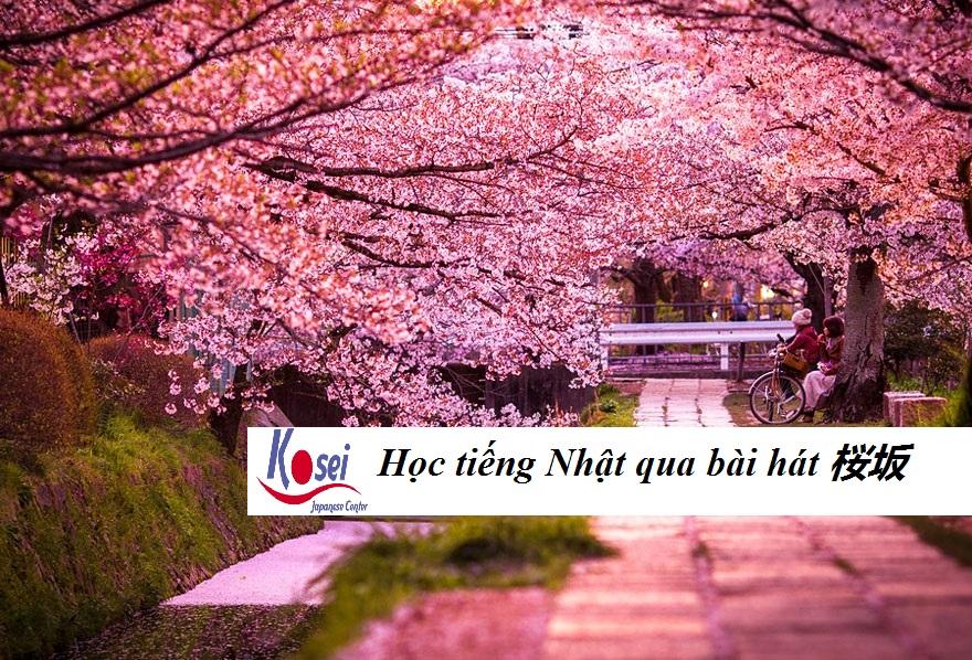 Học tiếng Nhật qua bài hát: 桜坂 - Dốc Anh Đào