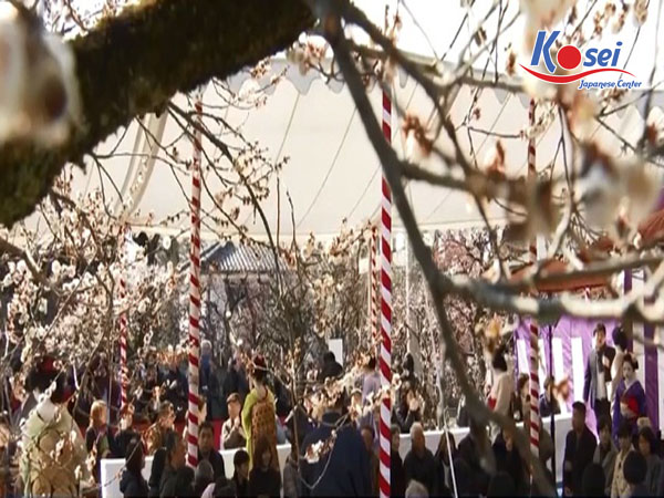 lễ hội hoa mận Nhật Bản