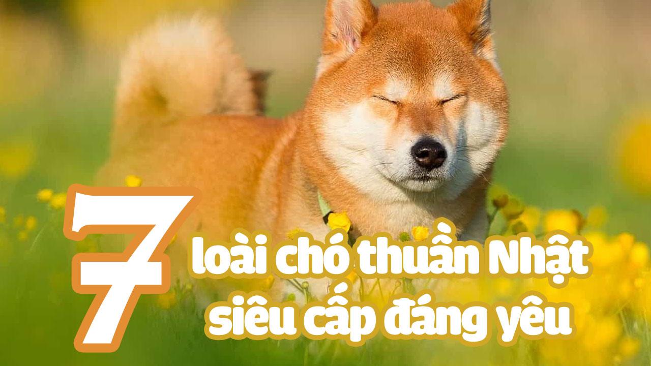 https://kosei.vn/7-giong-cho-nhat-ban-noi-tieng-ca-the-gioi-boi-do-dang-yeu-va-than-thien-n3037.html